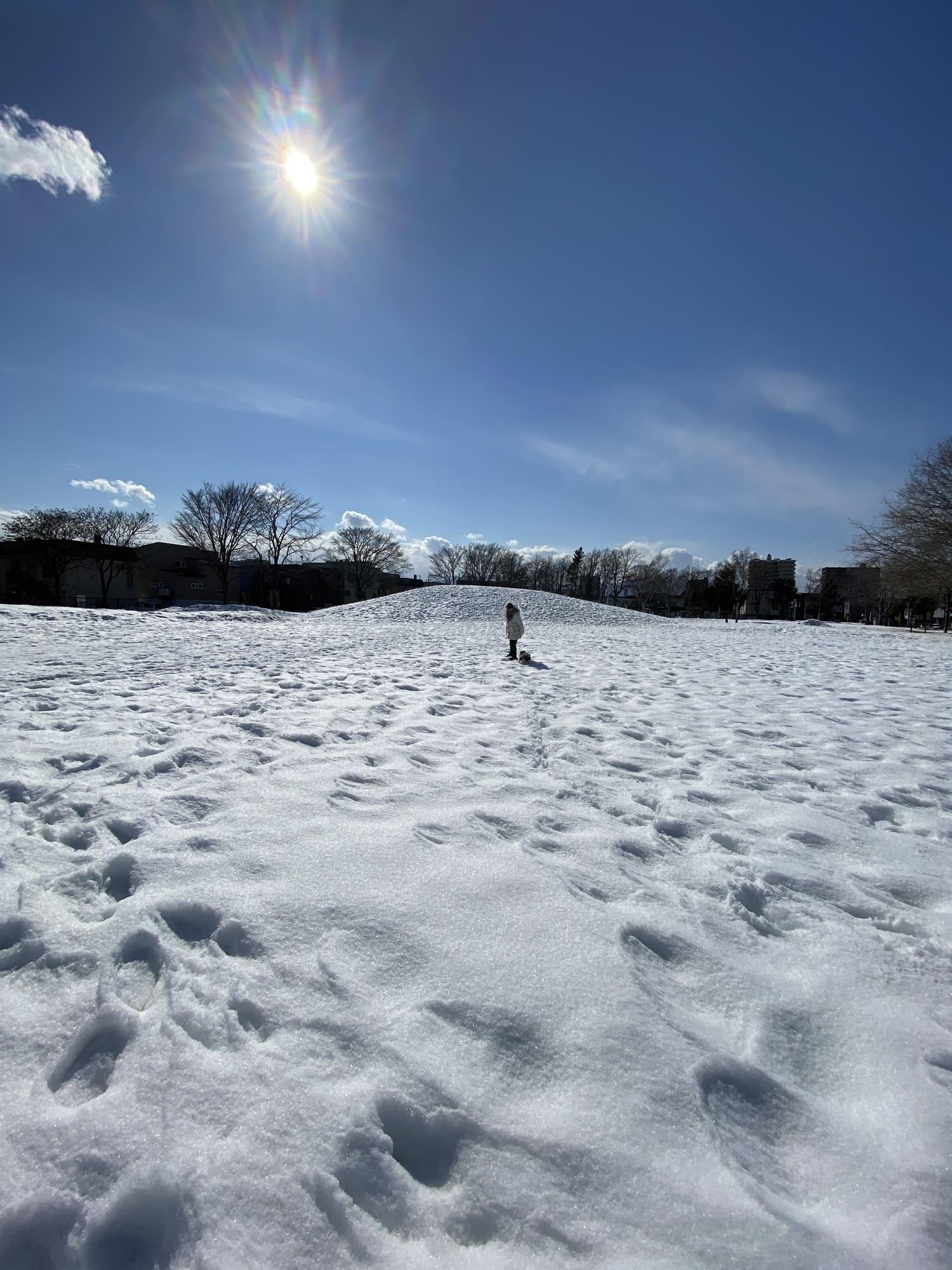 iPhone11で撮った雪景色